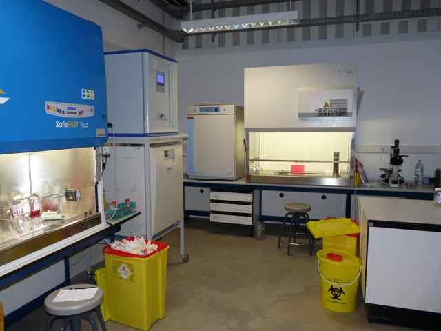 File:Gama cellcultureroom.jpg