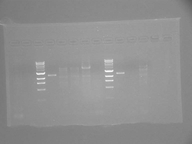 File:S13 M2D3-TR-gel.jpg