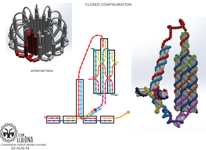 File:2014-EchiDNA-SKETCHBOOK-design-3.jpg