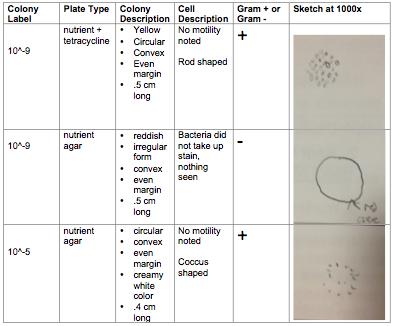 Bacterial Characterization Gan.png