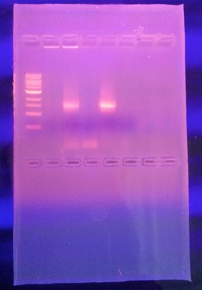 File:IMG.PCR1111.JPG