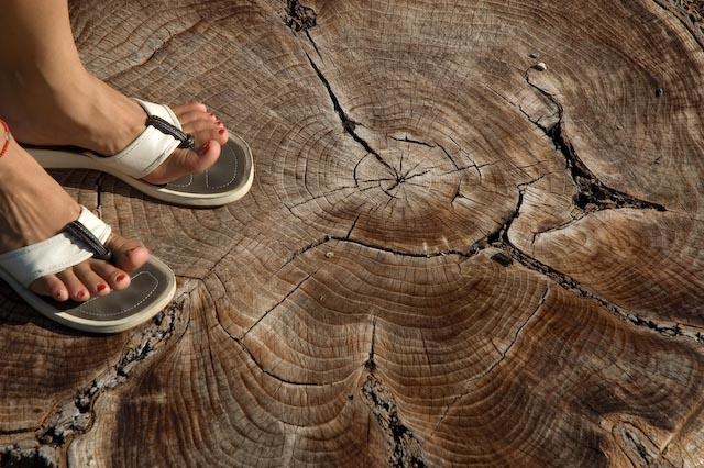 File:Treefeet.jpg
