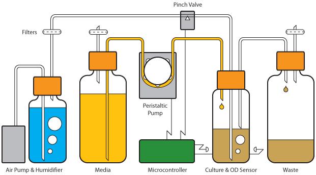 File:Evolivinator Diagram.jpg