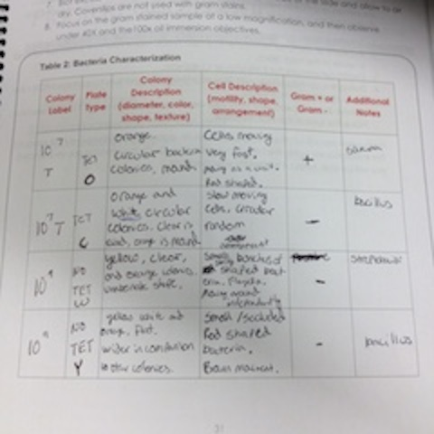 Essay tense checker
