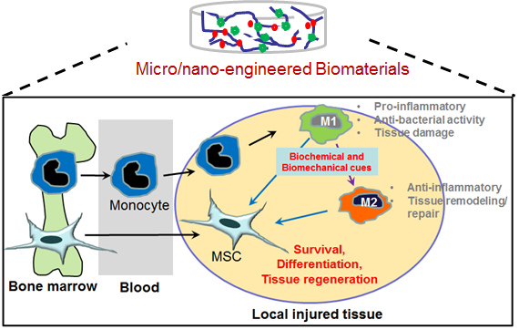 File:Kim lab research overview.png