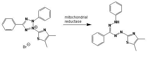 Tetrazolium to formazan.jpg