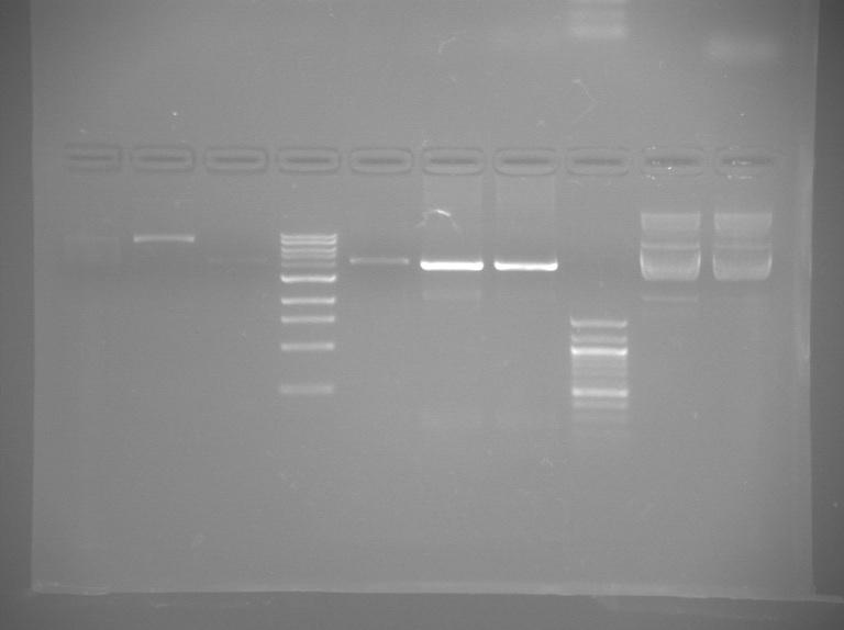 File:S13 M2D5 TR gel-Green.jpg