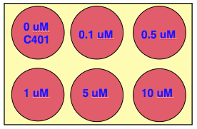 Plating schematic for irradiation assay. Each team should prepare one six-well plate from six communal cell populations pre-treated with C401 and then irradiated.