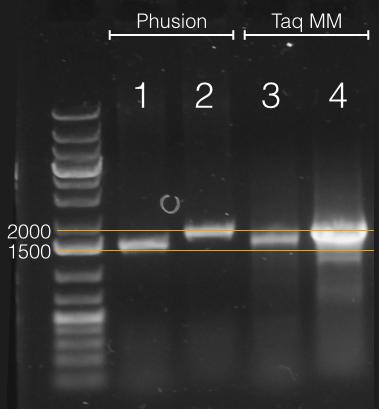 14.09.10 C on Luc SRVYR primer test.png