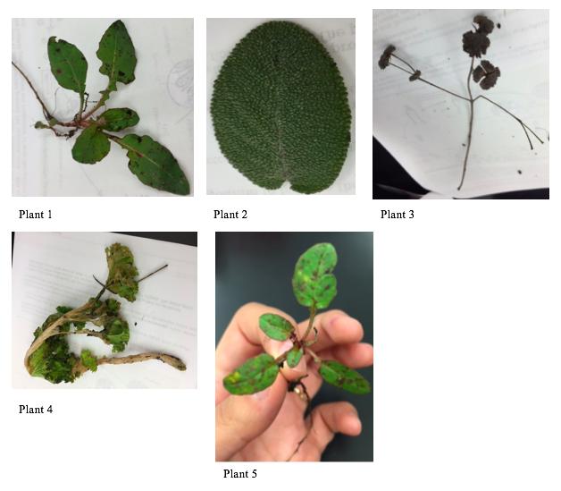 File:PlantPicsAJL.png