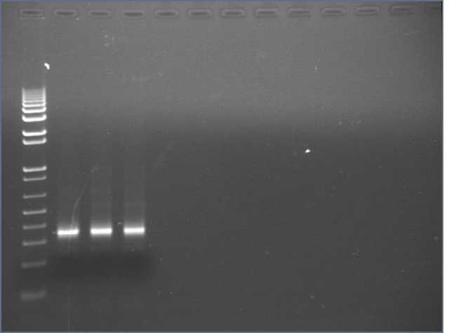7-19 PCR gel PT.jpg