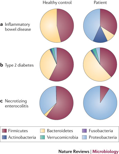 File:The Microbiome and Disease.jpg