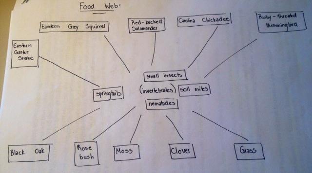 Food web .jpg