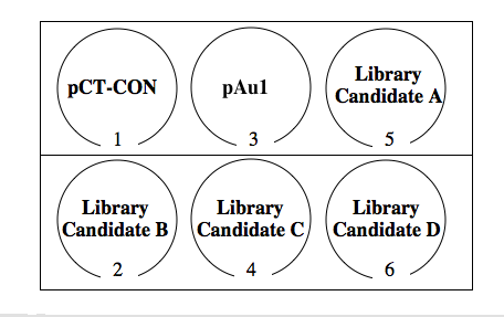 six well dish for rescreening library candidates