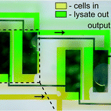 File:Electrochemical-lysis-chip icon.jpg