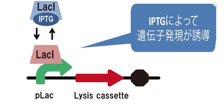File:Igem kyoto2010 circuit.png