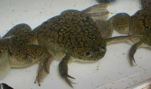 File:Frog 4.jpg