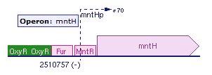 MNTH Gene binding site.jpeg