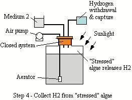 Hydrogen bioreactor schematic 4.JPG