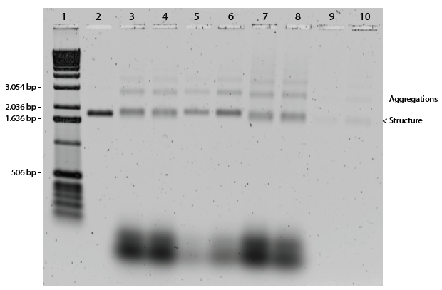 fig. 12. 1% agarose gel of the self-assembled DNA origami plate. 1) 1Kb DNA ladder, 2) M13 control, 3) 18 mM Mg, 5 hours, 20x ss, 4) 20 mM Mg, 5 hours, 20x ss, 5) 18 mM Mg, 5 hours, 10x ss, 6) 20 mM Mg, 5 hours, 10x ss, 7) 18 mM Mg, 13 hours, 20x ss, 8) 20 mM Mg, 13 hours, 20x ss, 9) 18 mM Mg, 13 hours, 20x ss, purified, 10) 20 mM Mg, 13 hours, 20x ss, purified.