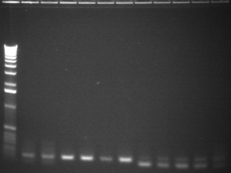 8-6 pcr sixth 11 from back.jpg