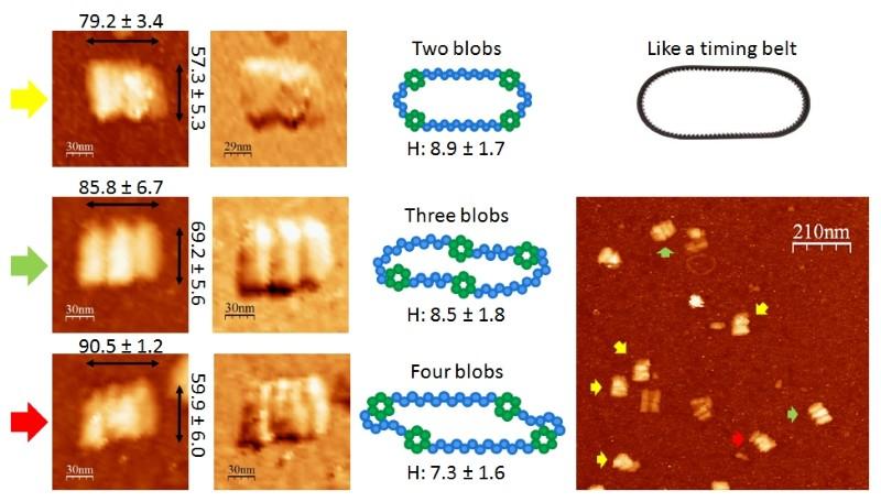 File:BM12 nanosaurs AFM Blob model800.jpg