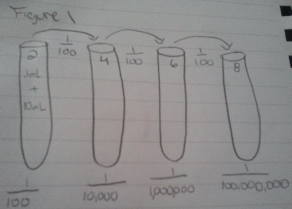 Dilution Drawing.png