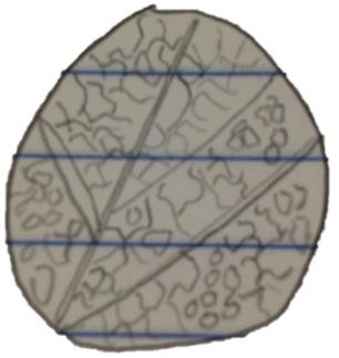 File:Drawing of sample 1.jpg