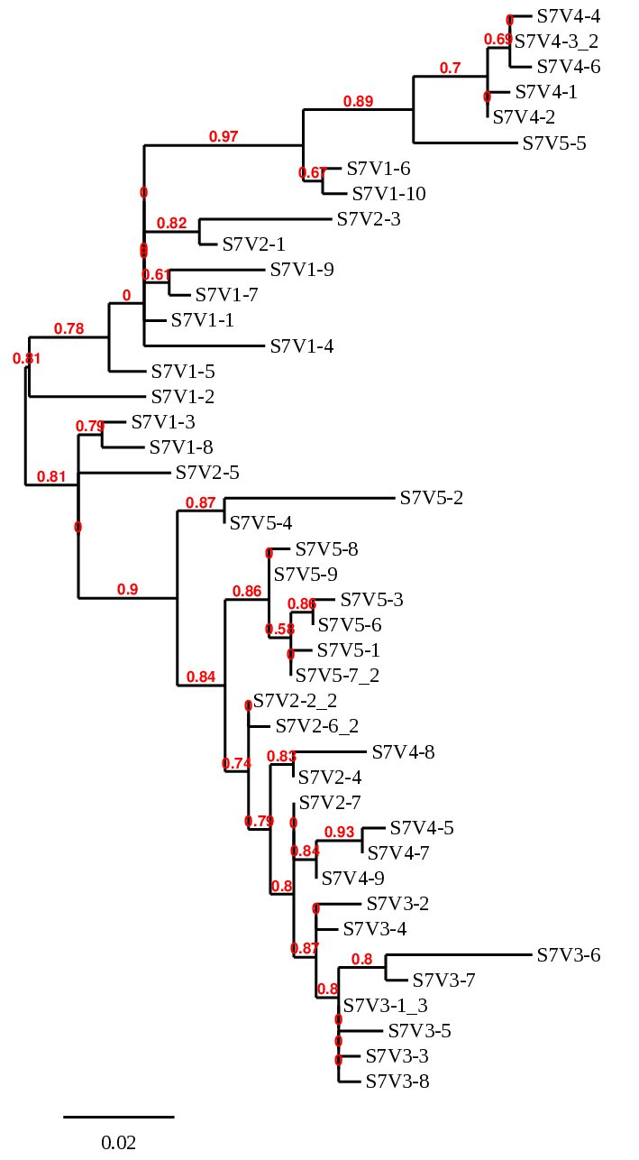 Non week5 act2part2-sub7phylogenetictree.png