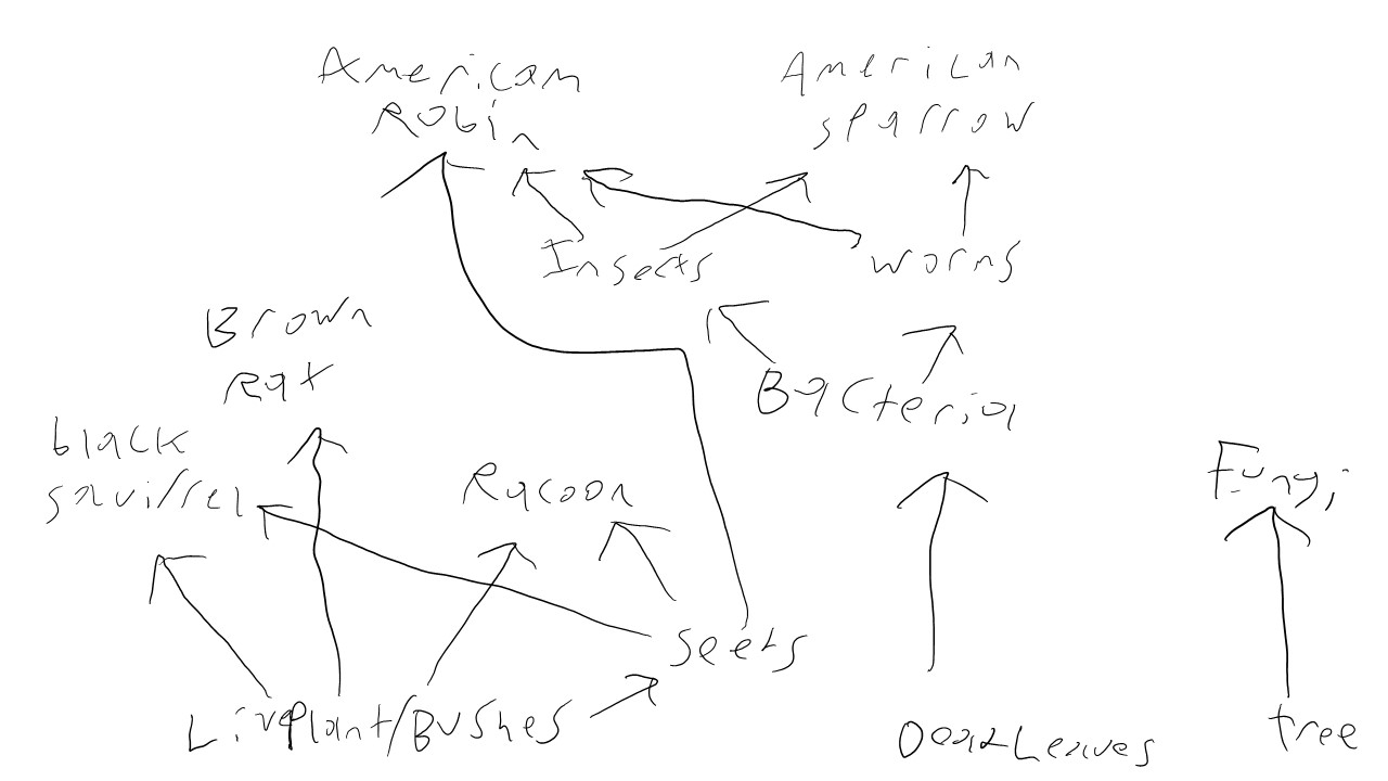 Food Web for Transect 1.jpg