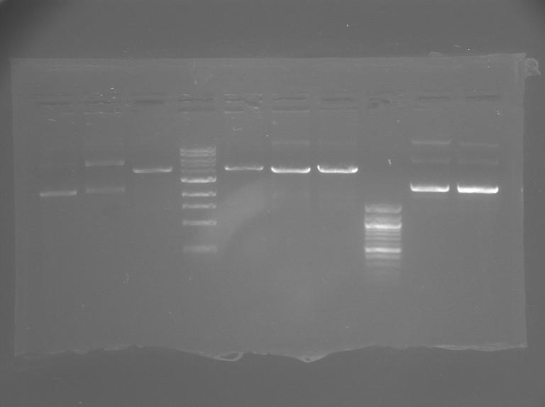 File:S12 M2D5 TR gel-Pink.jpg