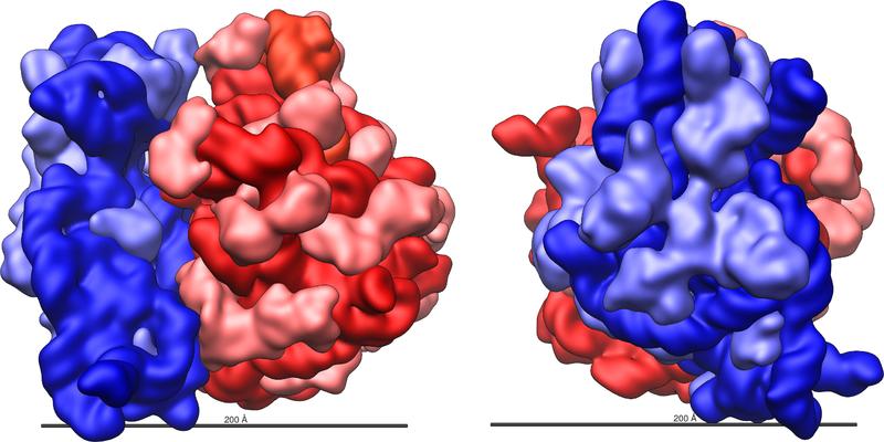 File:Ribosome.png