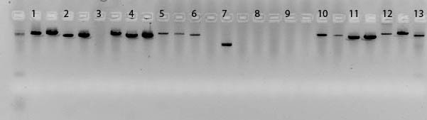 04March10 Original PCR.jpg