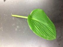 PLANT570.jpg