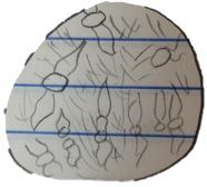 Fungi drawing.jpg