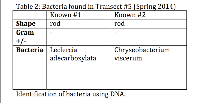 Image:spring bacteria found.jpg