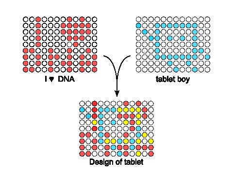 Design of DNA tablet