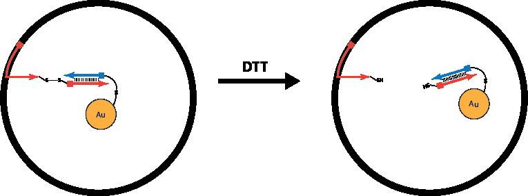 File:Disulfide linker for solubilization revised.png