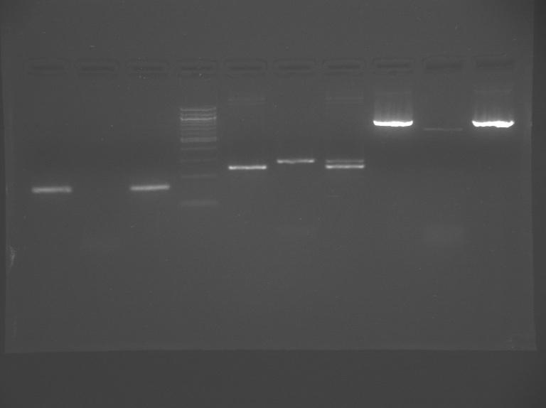 File:S13-M1D7-TR-Gel2-dim.jpg