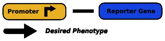 File:Unsplit-gene.png