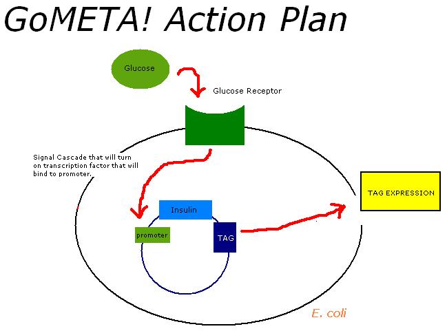 File:GoMETA ActionPlan.jpg