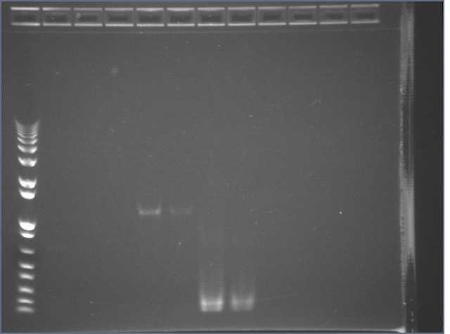 2007-07-06 F2620 PCR.jpg