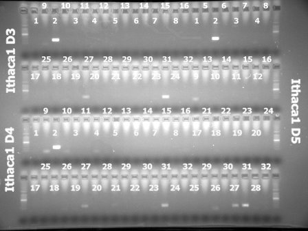3Mar'10 Ithaca1(D3,D4,D6).jpg