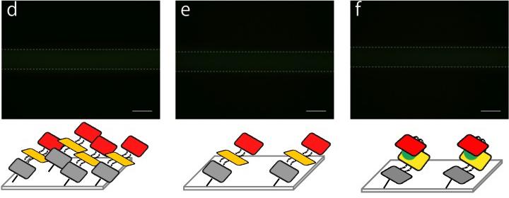 File:Biomod-2012-UTokyo-UT-Hongo Fixing on microfluidics (image-2) ver3.jpg