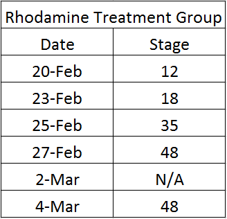 Image:Rhodamine stage.png