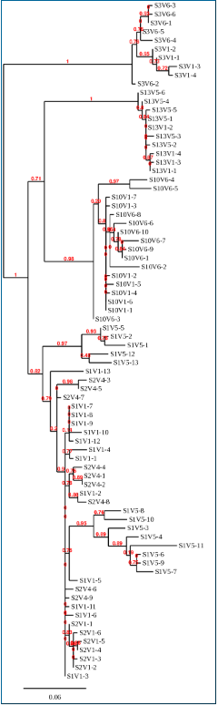 Generated Phylogenetic Tree of First and Last Visits from Subjects Chosen for Study.PNG