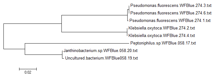 File:WF-Blue-Alignment-Tree-Image.png
