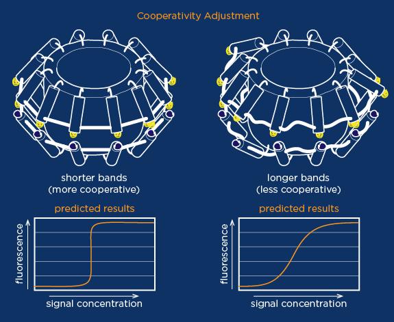 File:2014-EchiDNA-SOLUTION-TUNE-COOPERATIVITY.png