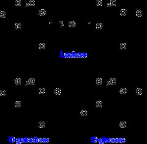 File:300px-Lactose etc.png