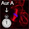 AuroraGiet.jpg